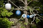 See The Forest For Its Lanterns